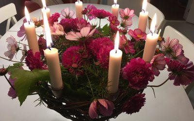 Julekalenderblomsten  – 22.december – Cosmos, Stolte Kavaler
